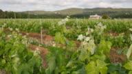 Vineyard Fields at Spring  Farm Closeup video