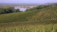 Vineyard hills on the banks of the Garonne video