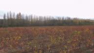 Vineyard in Autumn video