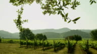Vineyard in Mountains on a Sunny Day video