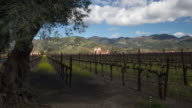 Vineyard in Napa Valley, California video