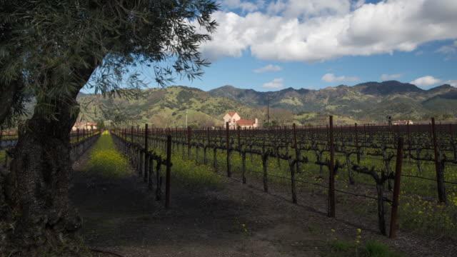 Vineyard in Napa Valley, California video