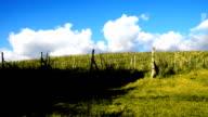 vineyard in Tuscany video