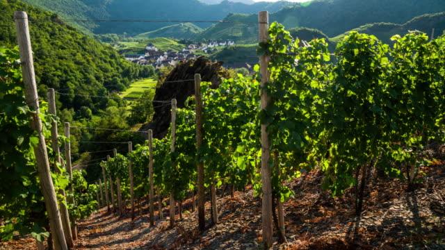 Vineyard in Wine Country Ahrtal - Germany video