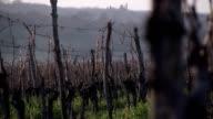 Vineyard in winter video
