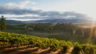 Vineyard Misty Sunrise video