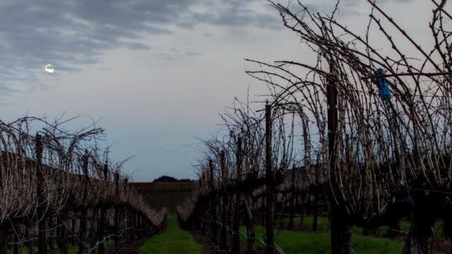 Vineyard Moonrise video