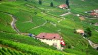 vineyard near Lac leman video