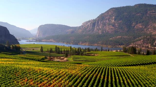Vineyard Okanagan Valley McIntyre Bluff Vasuex Lake video