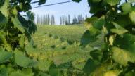 HD: Vineyard Region video