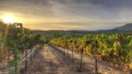 Vineyard Sunset video