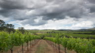 Vineyard video