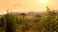 Vineyard with Mountains on Background at Sunset video