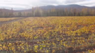 vineyards after the harvest, aerial video video