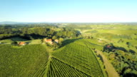 AERIAL Vineyards And Surrounding Countryside video