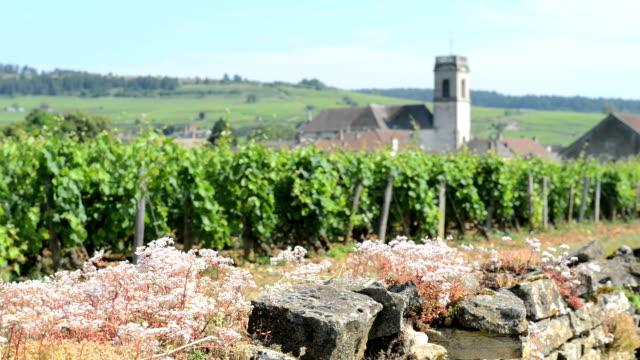 Vineyards Burgundy France video