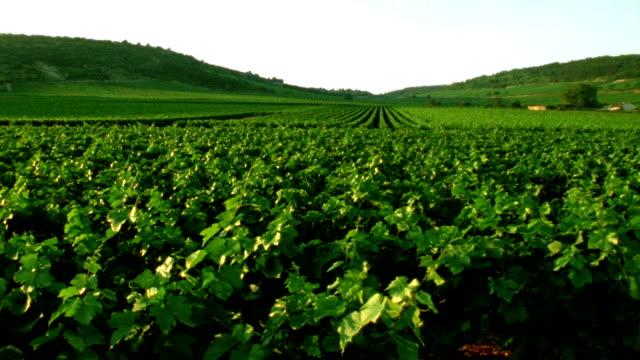 Vineyards in France video