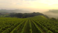 AERIAL Vineyards In The Fog video