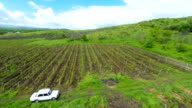 Vineyards in the Kakheti region video