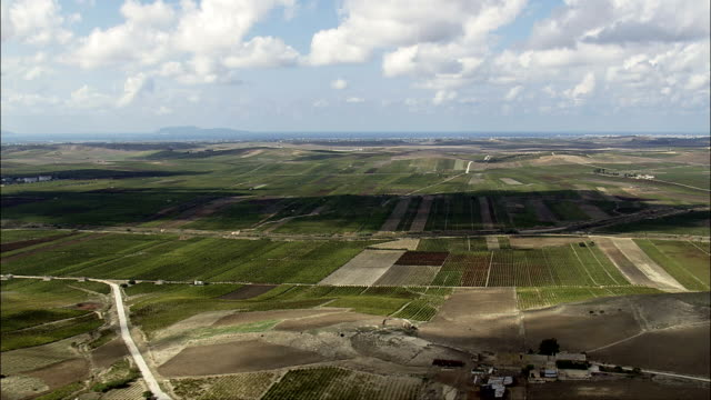 Vineyards With Mount Erice In Background  - Aerial View - Sicily, Province of Trapani, Trapani, Italy video