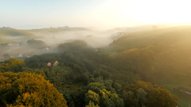 AERIAL Viniferous Countryside In The Sunrise video