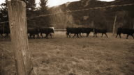 Vintage cattle drive in the Rocky Mountains video