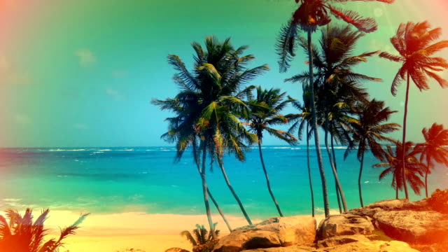 Vintage postcard look of Palm trees in Barbados video