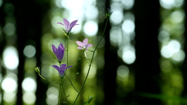 Violet flowers video