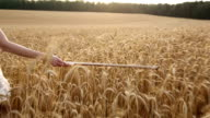 Violinist girl walking through a wheat field. Slow motion video