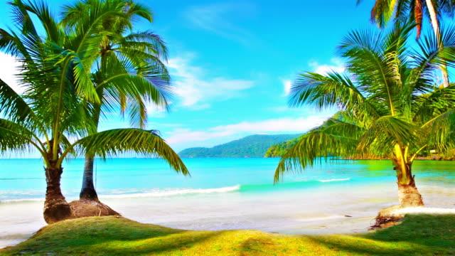 Virgin tropical island. video
