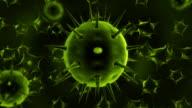 Viruses video
