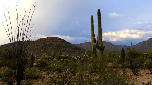 Vista view in Tucson Mountain Park video