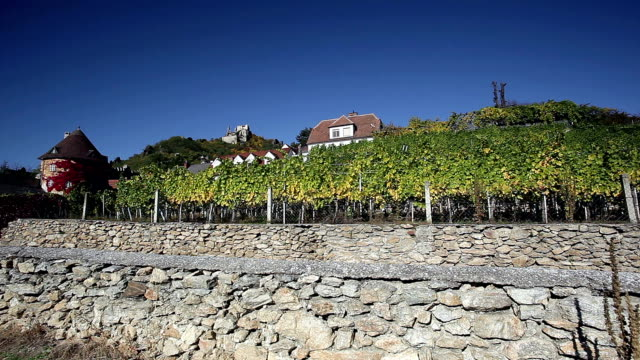 Viticulture in Dürnstein; Austria video