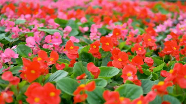Vivid flowers in a garden Blowing. Industrial plant growing greenhouse. 4K. video