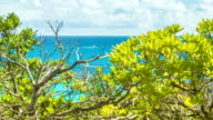 Voyeuristic View Through Bermudan Island Plants of Oceangoing Boat video