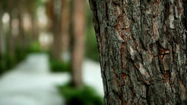 Walk in the park between the pines video