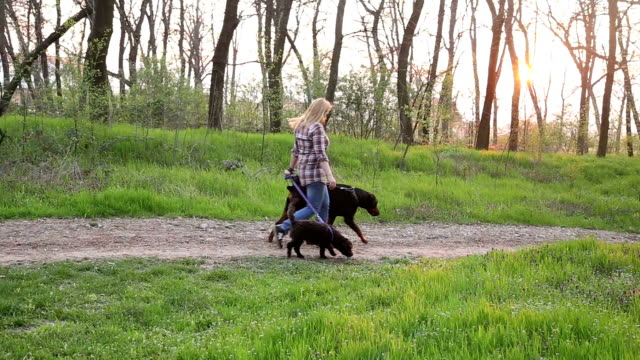 Walk the dogs in the park video