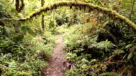 Walking a path through a cloudforest reserve video