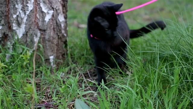 walking a pet video