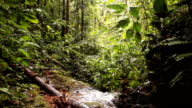 Walking along a rainforest stream to waterfall video