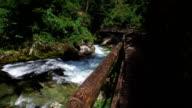 Walking around Vintgar Gorge. Wild Radovna river flows near the wooden bridge. Clean blue water and green forest. Triglav National Park, Julian Alps, Bled valley, Slovenia. video