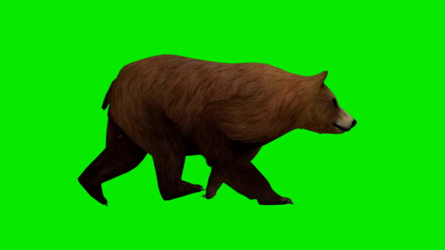 Walking Bear Green Screen (Loopable) video