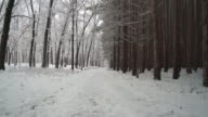 Walking down snowy trail along edge of pine forest.  Ronin Stabilized Shot. video