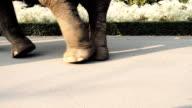 Walking Elephants video