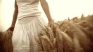 Walking In A Wheat Field video