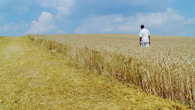 HD DOLLY: Walking In A Wheat Field video