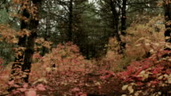 Walking in autumn forest video