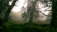 Walking in fog at the mountain;The misty forest in  autumn video