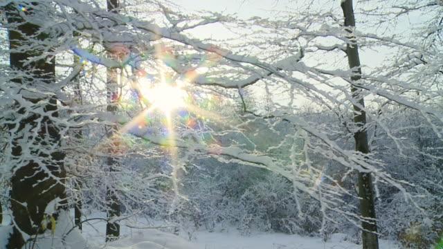 HD SLOW MOTION: Walking In Idyllic Winter Forest video