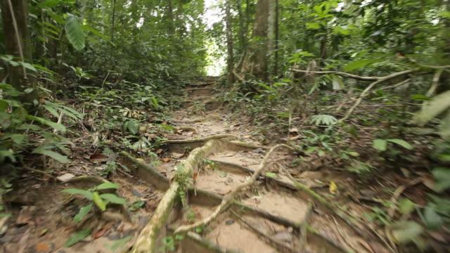 walking in jungle video
